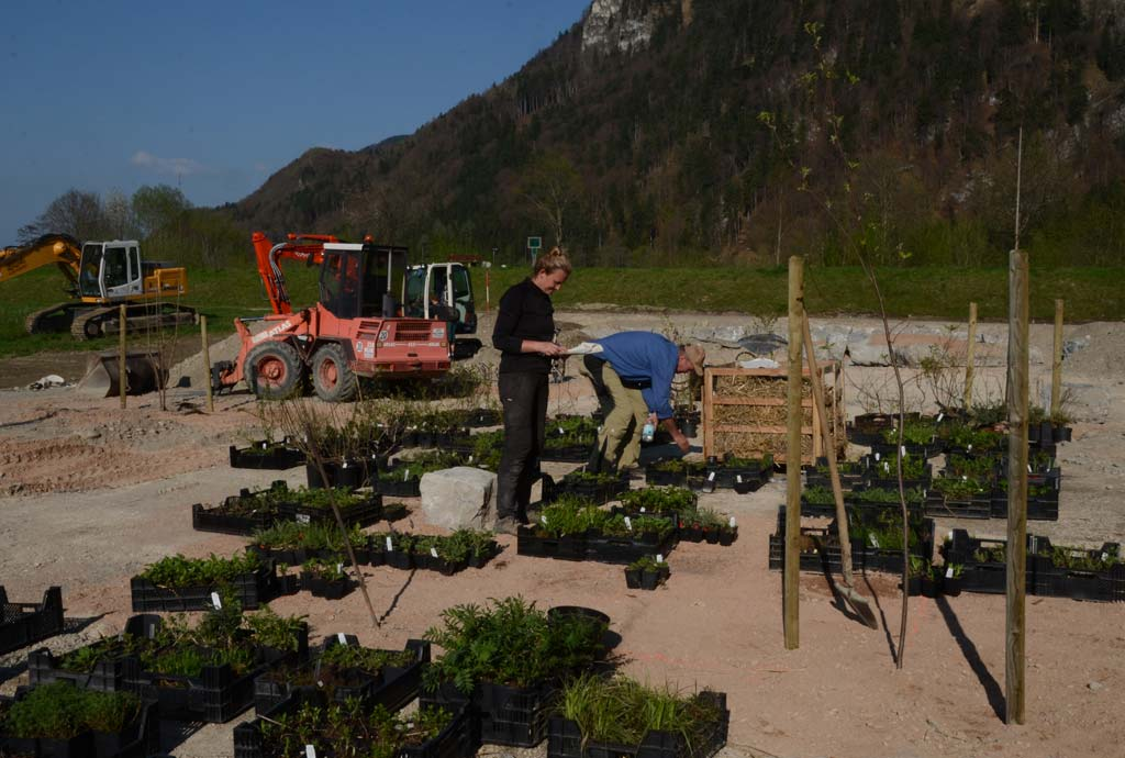 Viele Pflanzenkisten und zwei Menschen stehen auf dem Parkplatz. Sortieren und Ausstellen der Wildpflanzenlieferung, eine dankbare Aufgabe zum Wildpflanzen kennenlernen für die Praktikanten vom Naturgarten-Profi-Lehrgang.