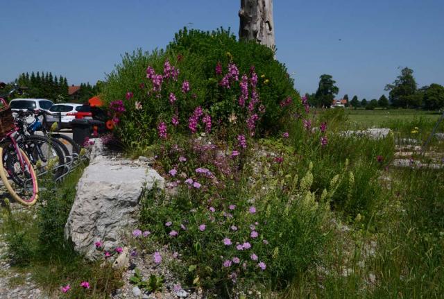 Wildblumenbeet am Parkplatz mit Totholz, Wildgehölzen und blühenden Wildstauden wie gelber Resede oder rosa Taubenskabiose