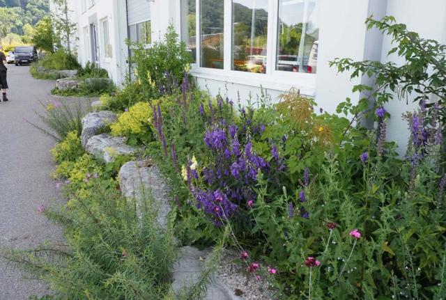Mit großen Böschungssteinen begrenzte Wildblumenbeete des Schattens begleiten die Mitarbeiter auf dem Weg zur Arbeit. Man sieht tiefblaue Acker-Glockenblumen, gelbgrünen Frauenmantel und hellgelben Fingerhut.