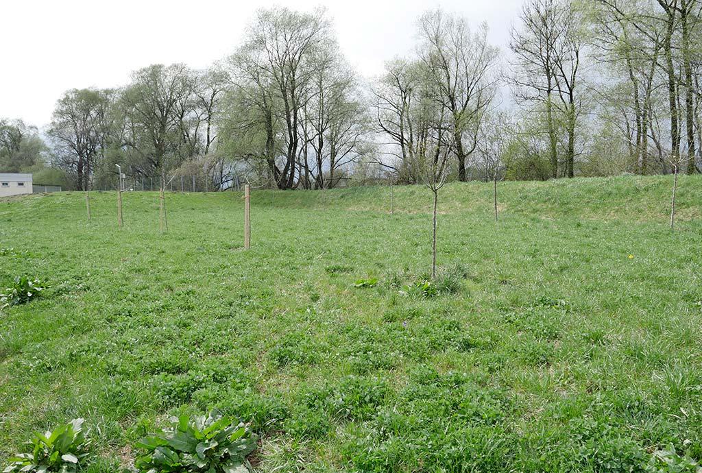 Im Projekt Blütenreich Tirol macht sich ein ganzes Bundesland offen für die Idee. Hier eine Fettwiese in Kirchbichl vor der Umgestaltung. Artenarme Graswiese mit Klee.