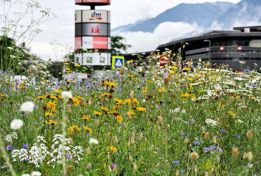 Bunte Magerwiese auf dem Kreisel in Brixlegg,  so wie sie nach Tirol passt. Sieht aus, als wäre es schon immer so gewesen