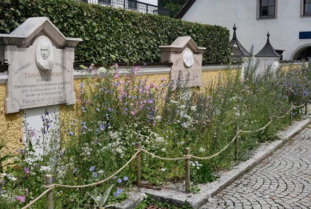 Viel blaue Wegwarten und rosa Malven vor Mauer. Im Ortszentrum ein weiterer bunter Saum in St. Johann