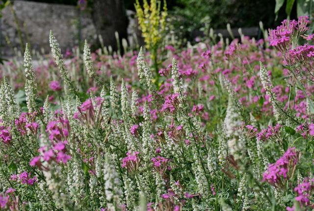 Weiße Resede und rosa Nelkenleimkraut. Solche Bilder wie hier in Hall braucht nicht nur Tirol