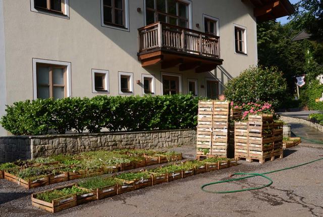 Juchu, es geht los. Jede Menge Kisten von Wildstauden zur Artenanreicherung und für Neuanlagen warten am Seminarhof