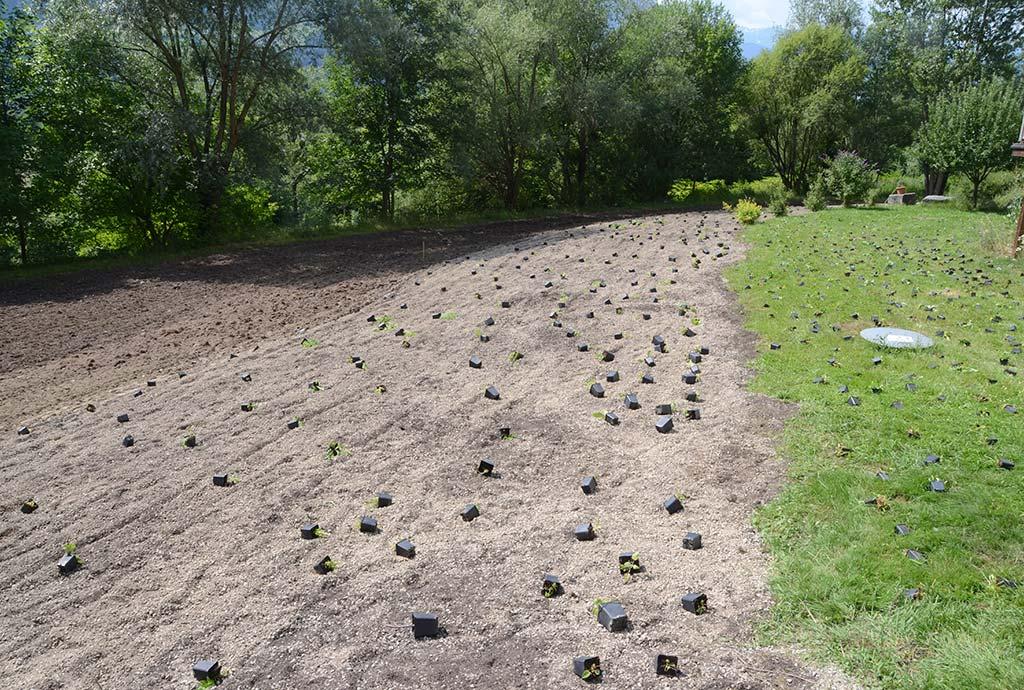 Auf dem Mittelstreifen die Neuanlage eines artenreichen Saumes, auch hier liegen schon Wildstauden aus. Ganz unten die gefräste Fläche mit der Burrimethode.