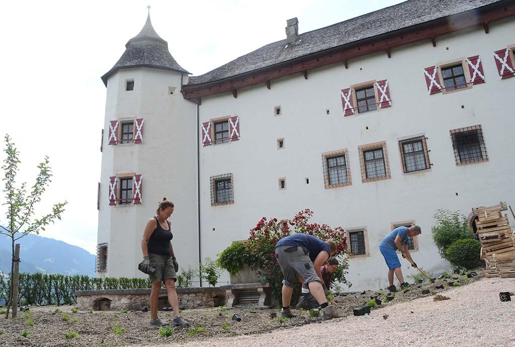 Neuanlage von Magerwiesen im Schloßgarten. Die Wildstauden auf der Kiesfläche werden gepflanzt