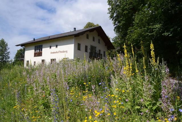 Blühender Saum mit Muskatellersalbei. Schon Jahr nach der Ansaat wird der Seminarhof Tratzberg von Wildblumen umschirmt.