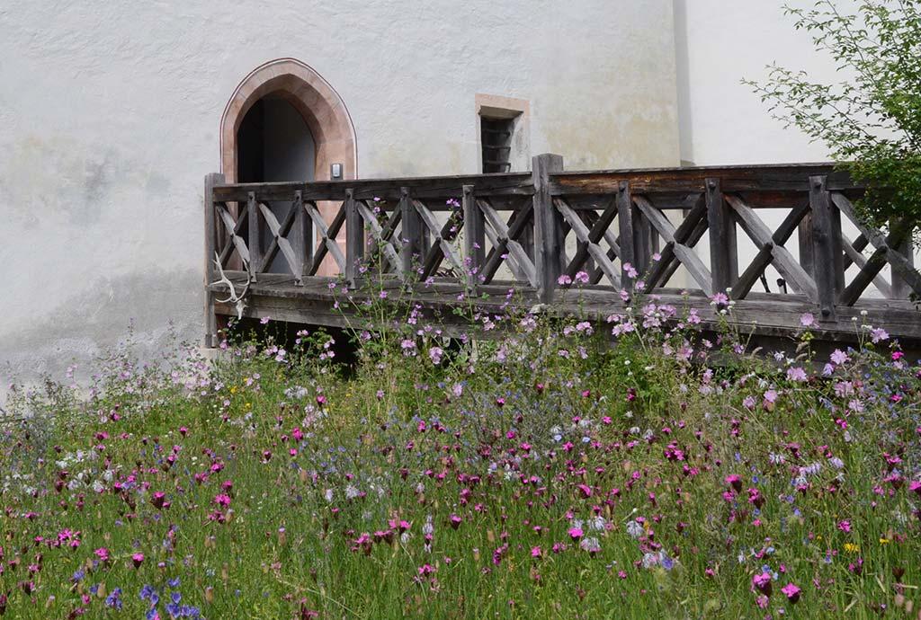 Die Magerwiese im Schloßgarten ist vom feinsten. Wilde Malve, Karthäusernelke und mehr