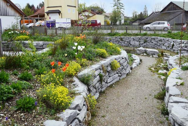 Der Senkgarten im Frühling. Hier führt die wassergebundene Wegedecke hinunter zum Teich, gesäumt von frühjahrsblumigen Beeten mit gelbem Bergsteinkraut, weißen und oragne Tulpen.