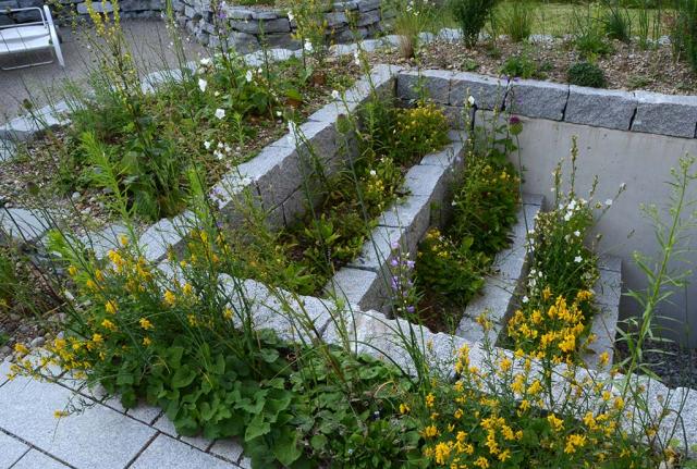 Granitbordsteine, fest vermauert, dazwischen weiße Glockenblumen und gelbe Ginster. Die Lichtschacht-Abtreppung ist nicht naturnah und von uns, die Bepflanzung und Ansaat schon.