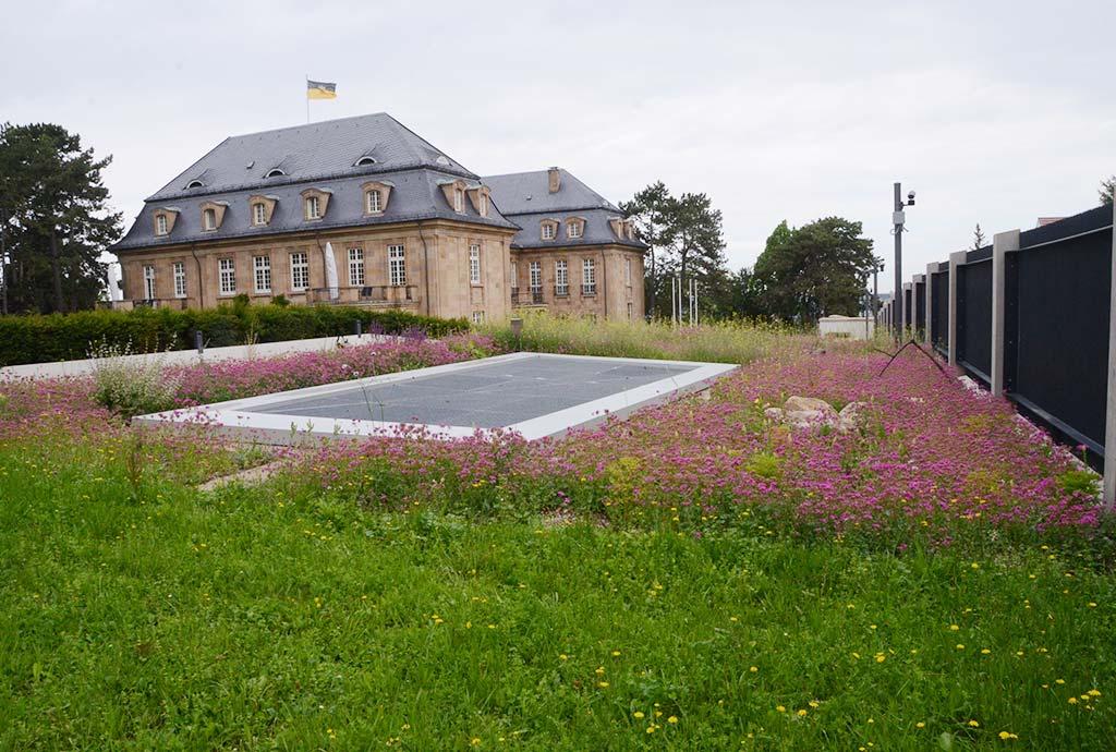 Weiter im ersten Jahr. Vorne der artenreiche, teils gelb blühende Blumenrasen mit einem Kräuteranteil von 80 %. Hinten die insektenfreundlichen Neuanlagen mit rosa Nelken-Leimkraut