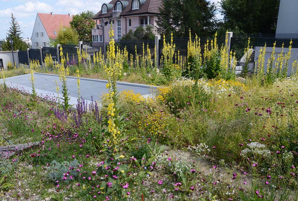 Ein (H)Ort für Insekten. Vorher waren hier Schnitthecken aus Hainbuche und Eibe und schnöder englischer Rasen. jetzt stehen überall bunte Blumen.