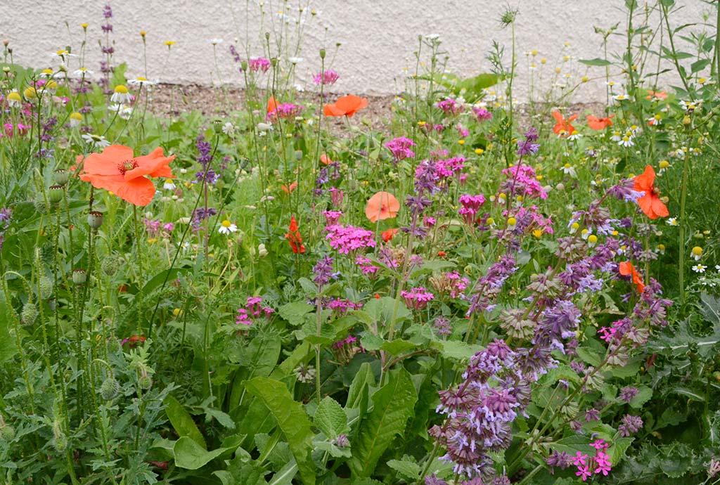 Man sieht ein kunterbuntes Wildblumenbeet. Vielfalt in Form, Farbe und vor allem oekologischer Funktion. Für jede Bluete, jedes Blatt, jede heimische Wildpflanze gibt es tierische Spezialisten