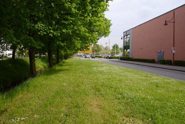 Bretten 2016. Viele hundert Meter Grasstreifen entlang der Hauptstrassen