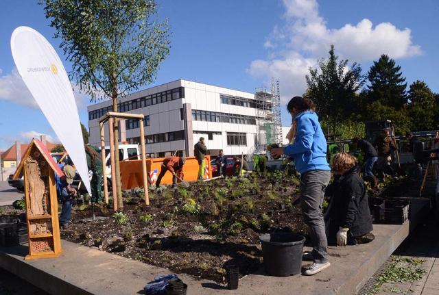 Ludwigsburg 2016. Voher stand am technischen Rathaus ein Bambusbeet. Im Workshop mit Bauhofleuten wird es gerade bunt und lebendig gemacht. Wir pflanzen Wildstauden