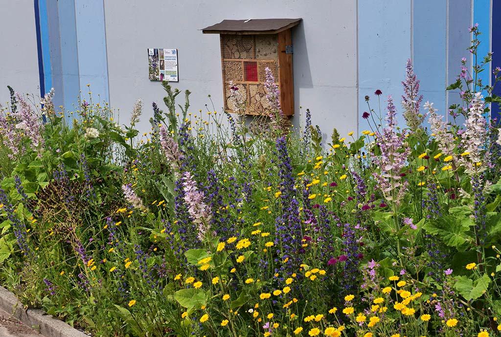 Ettenheim 2019. Kunterbunter Saum mit rosa Muskatellersalbei, blauem Natternkopf und gelben Färberkamillen. So sieht es nach unserer Planung aus